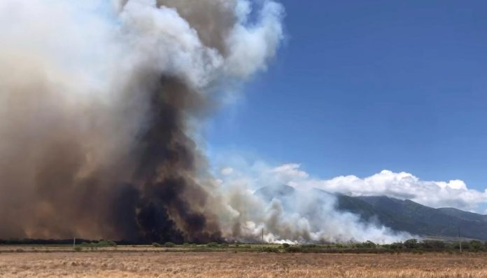 Hawaii governor declares emergency for Maui wildfire