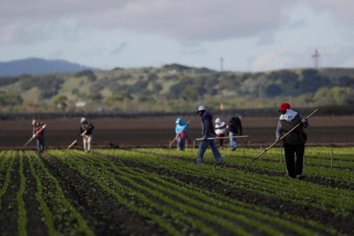 Canada, U.S. farms face crop losses due to foreign worker delays